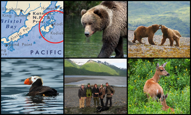 Collage of photos showing a map of Kodiak Island, photos of bears, puffins, and other wildlife